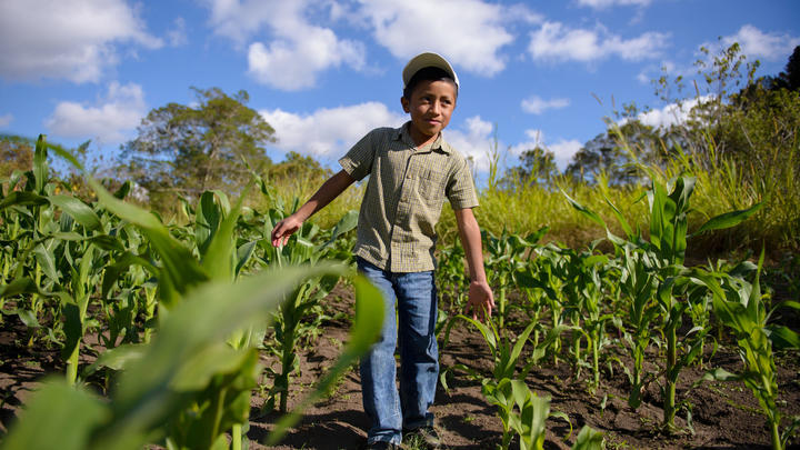 Junge Kind Country Page Honduras  World Vision